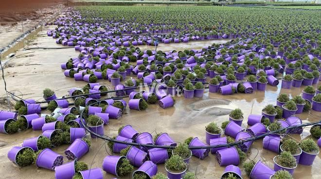 danni maltempo agricoli