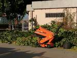Magnolia ex ospedale albenga