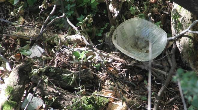 Lampioni nel bosco di Sant'Eusebio