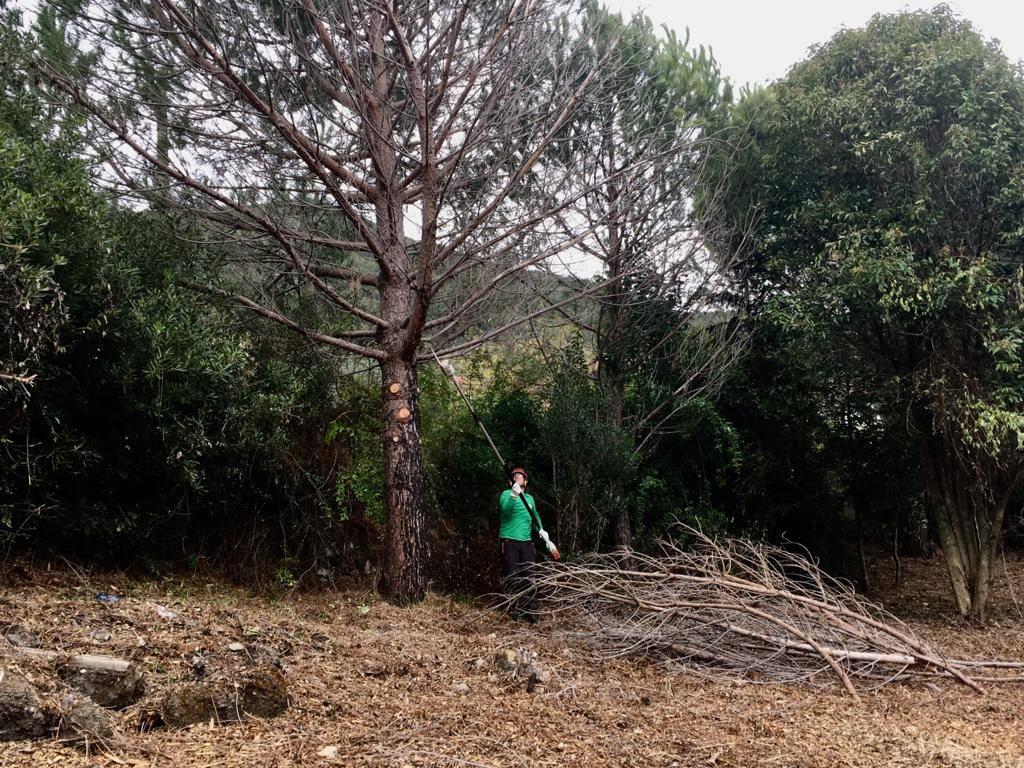 riqualificazione bosco struppa