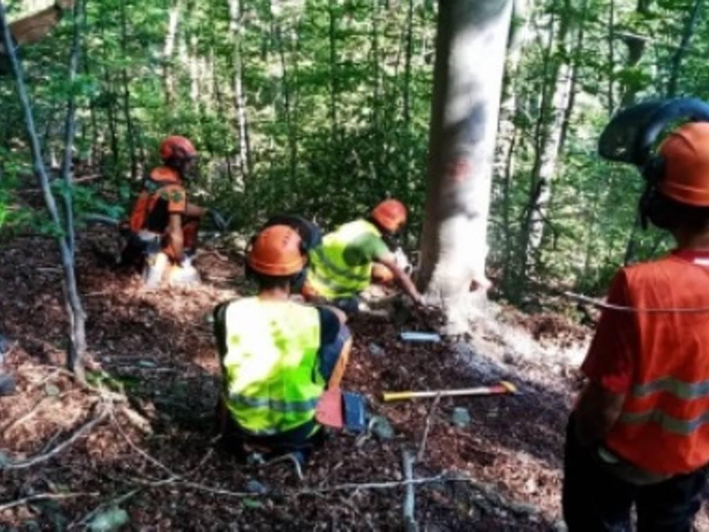 agroforestale legno