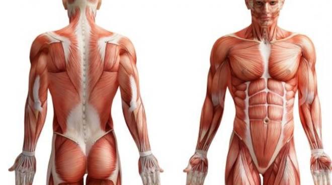 Corpo umano anatomia