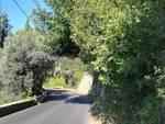 strada provinciale alassio testico vegetazione
