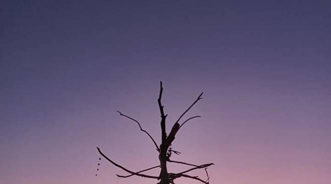 albero di natale varigotti