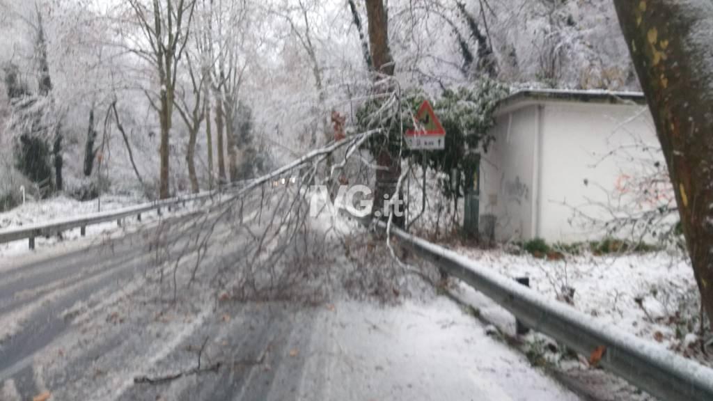 albero caduto sp29 cadibona