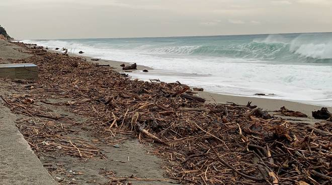 legname spiaggiato varigotti
