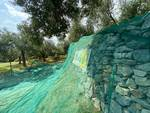 Olio extravergine di oliva Pedro
