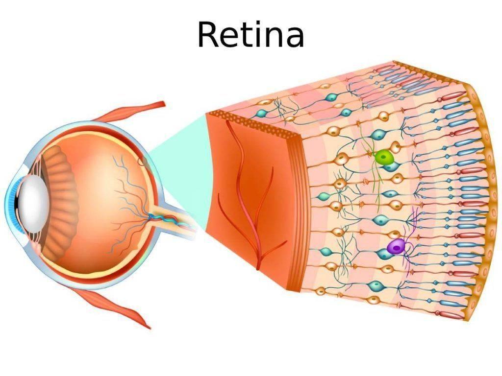 Retina occhio