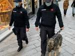 Carabinieri, controlli dell'unità cinofila ad Alassio