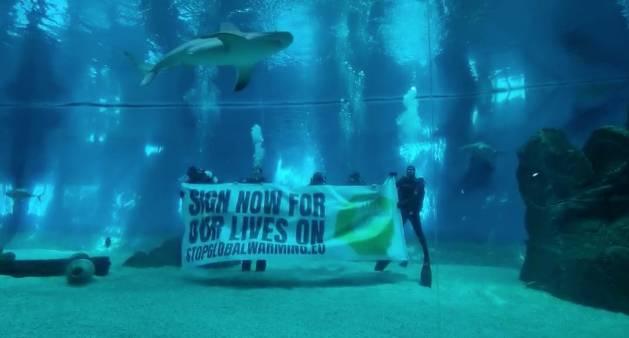 acquario di genova squali