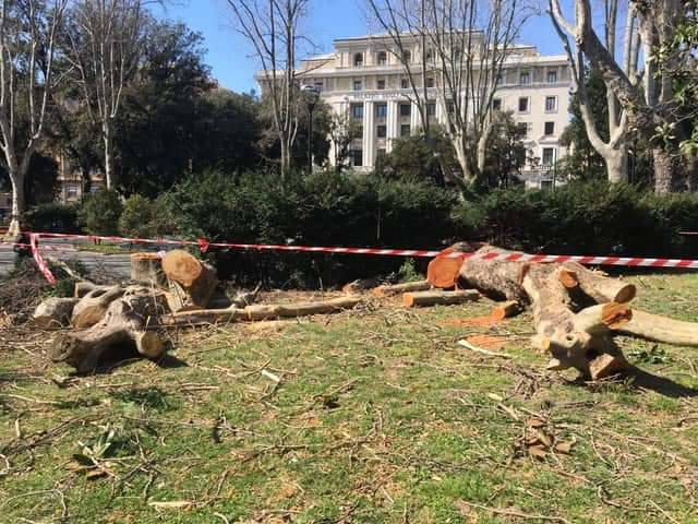 alberi tagliati brignole