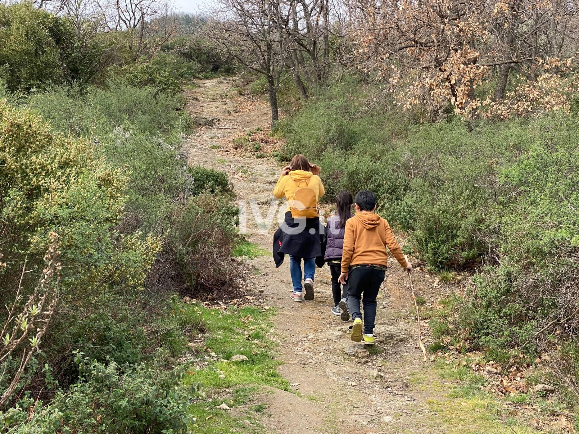 Escursionismo sentieri bosco natura camminate outdoor
