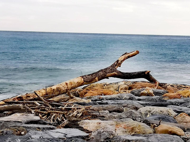 fionda di legno albenga