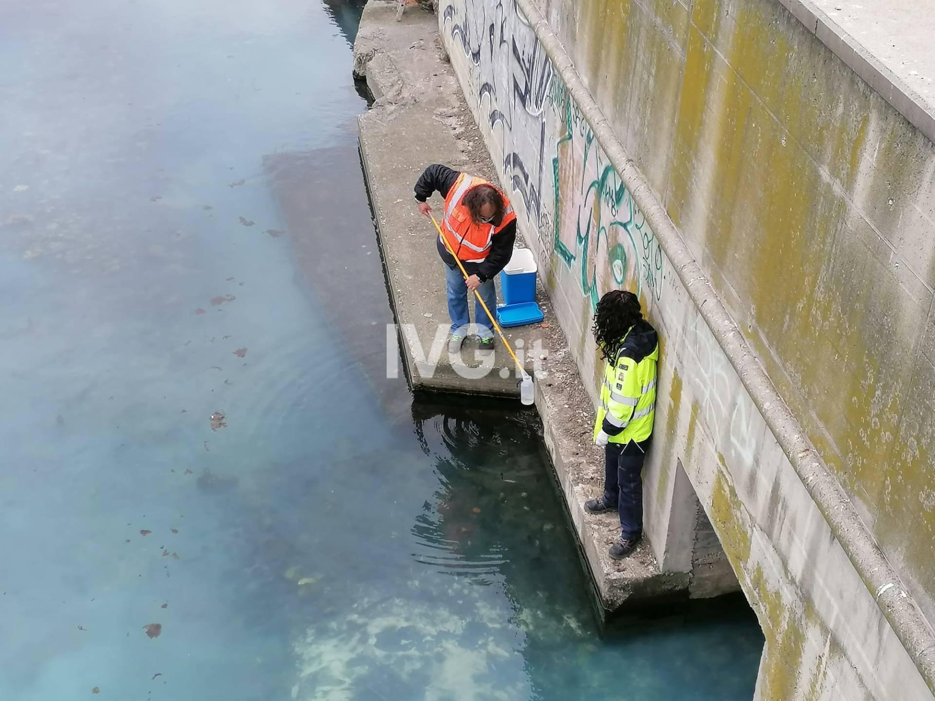 Presunto sversamento alla foce del Letimbro