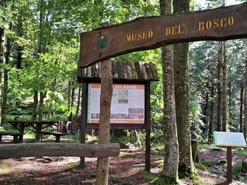 museo del bosco
