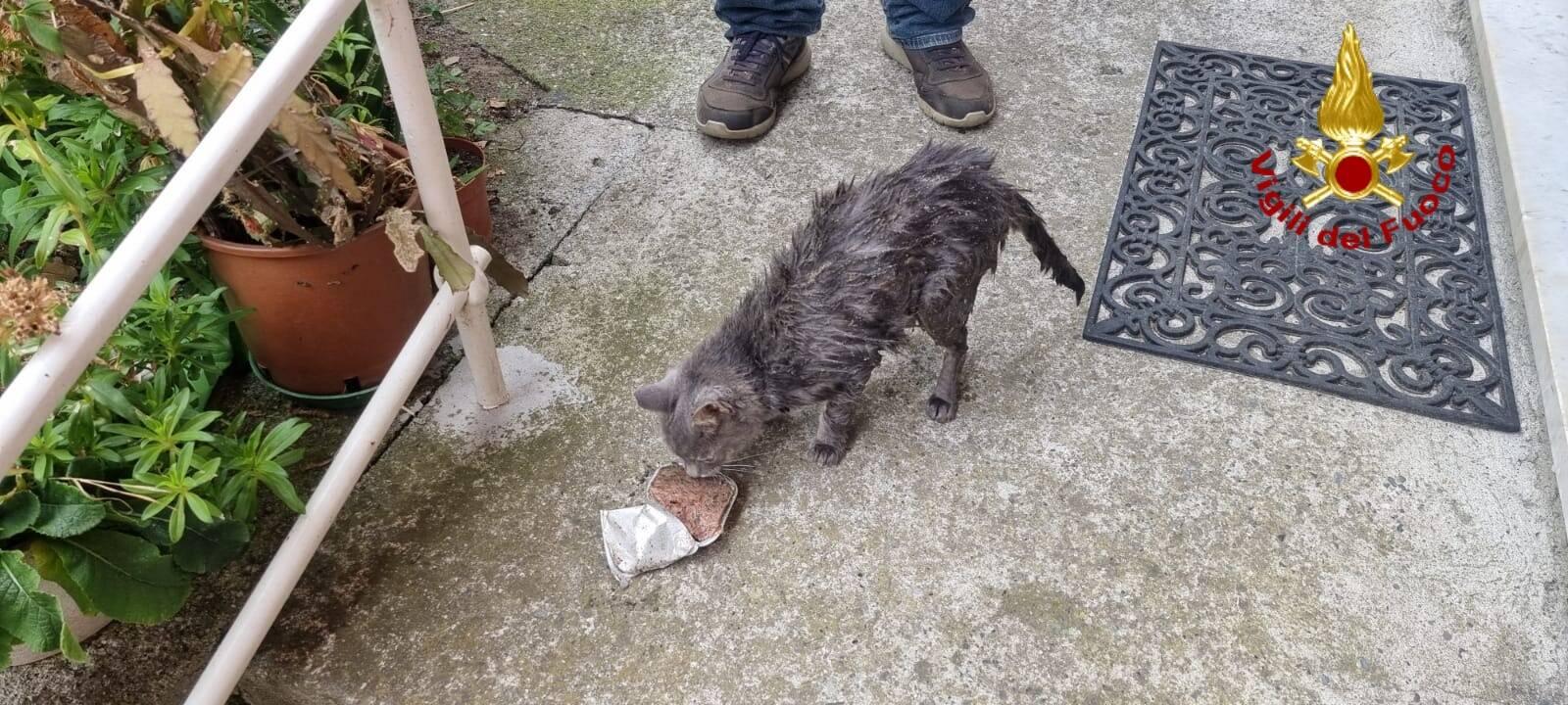 soccorso gatto vigili del fuoco