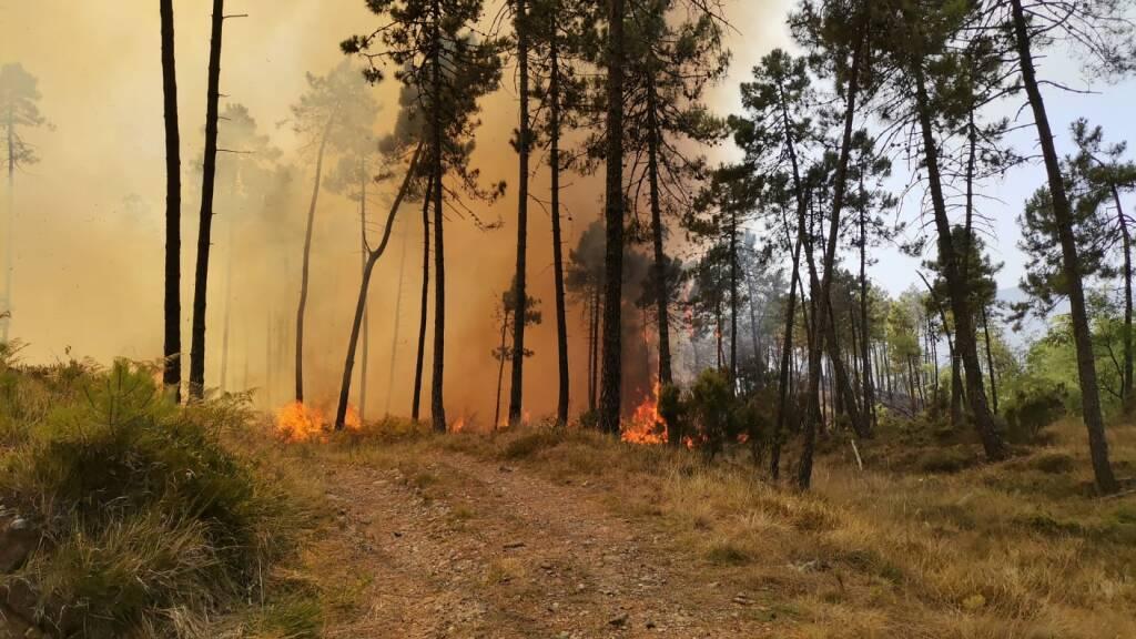 incendio boschivo framura