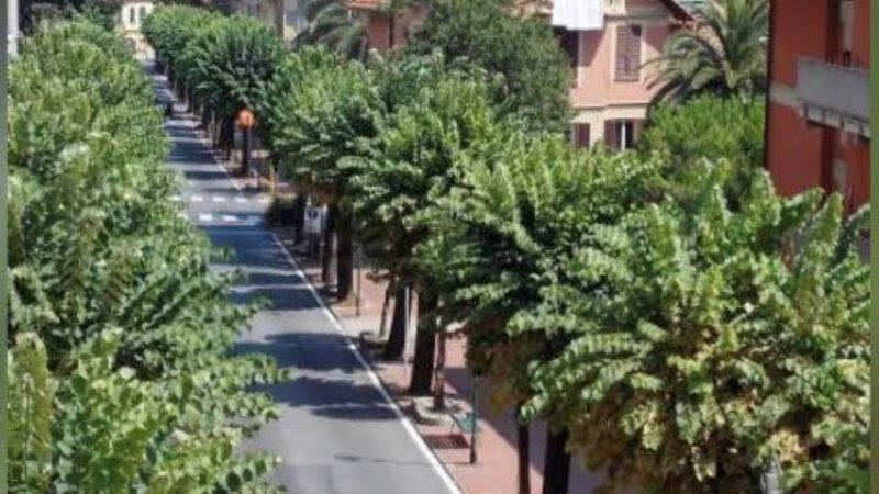 alberi santa margherita