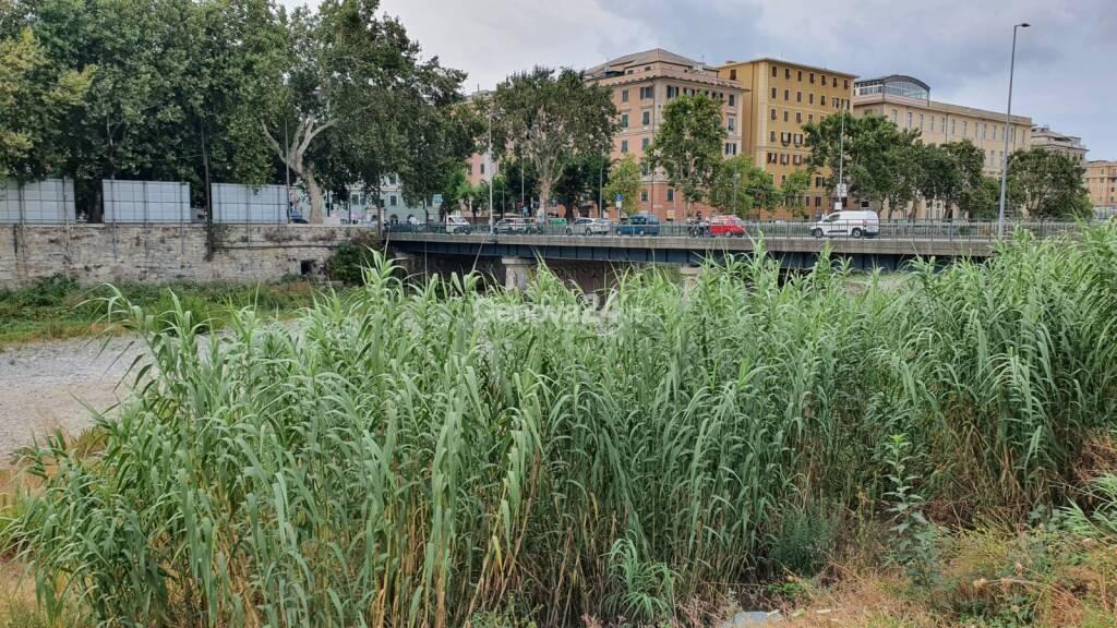 I torrenti genovesi sono già una giungla: la situazione del Bisagno e del Fereggiano