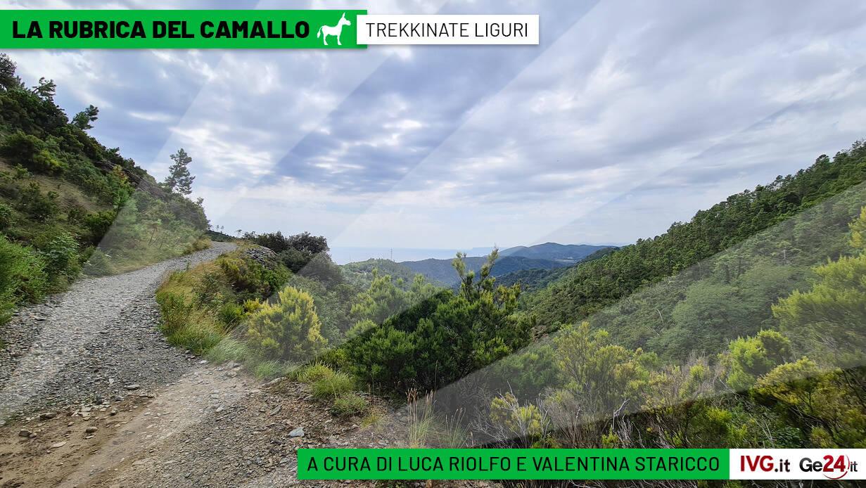 Camallo