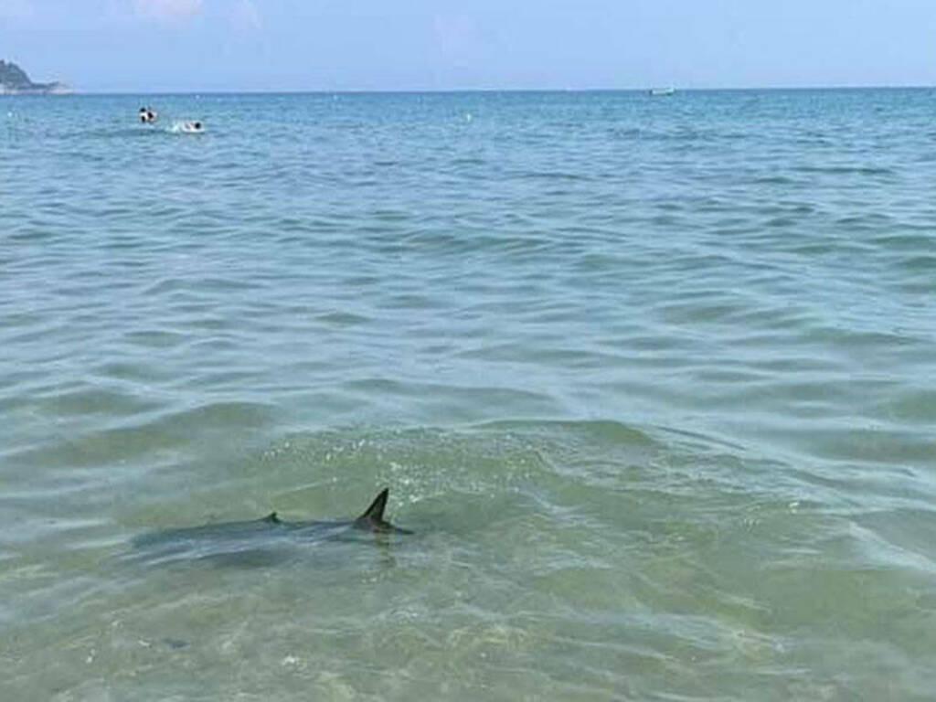verdesca - squalo - alassio