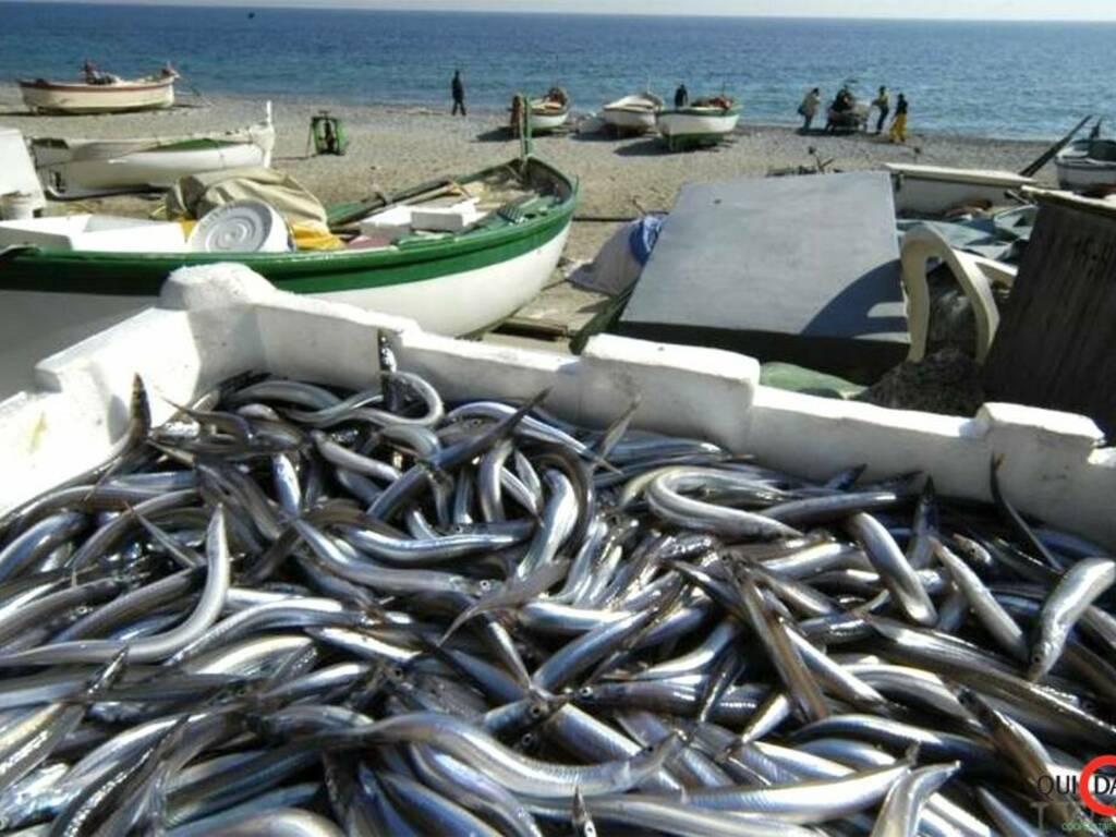 Noli pesci pesce pescatori