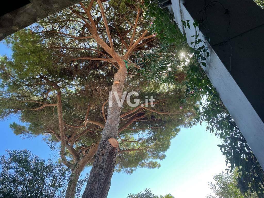 Potato il pino pericolante in passeggiata a Celle