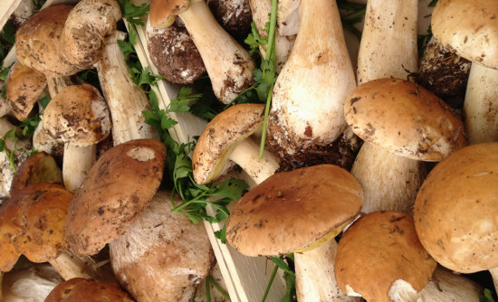 funghi-porcini.1024x768