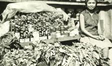 piante medicinali filippine
