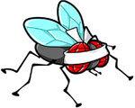 mosca cieca